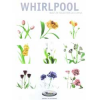 WHIRLPOOL RELEASES STUNNING NEW BUILT-IN BROCHURE